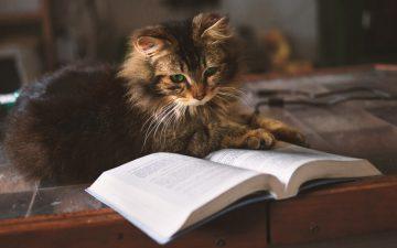 読書の副作用