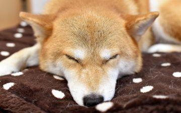 寒さ対策(快眠編)
